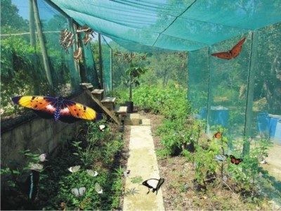 Butterfly Breeding Centre02